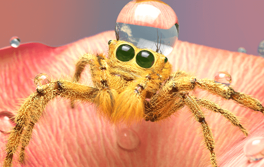 Animated golden spider resting on pink flower petal